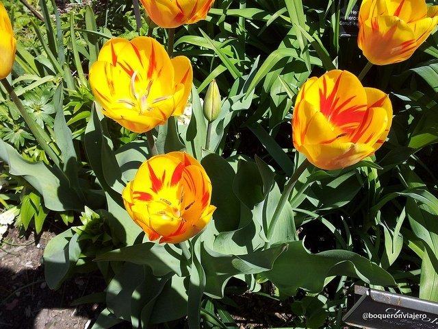 Flores del Jardín Botánico de Brooklyn
