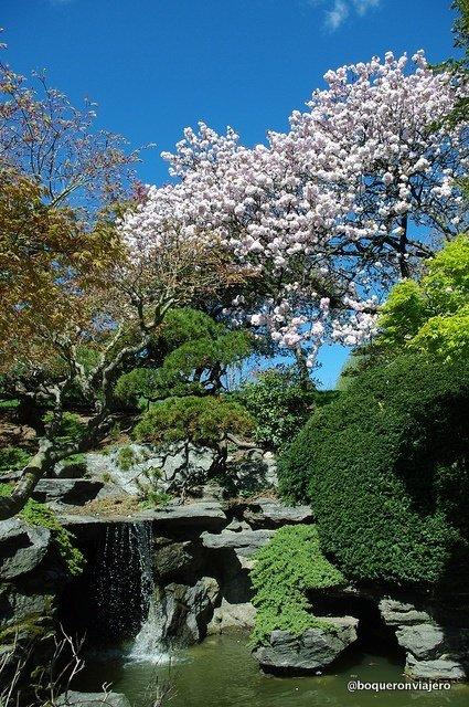 Jadín japonés en el Jardín Botánico de Brooklyn