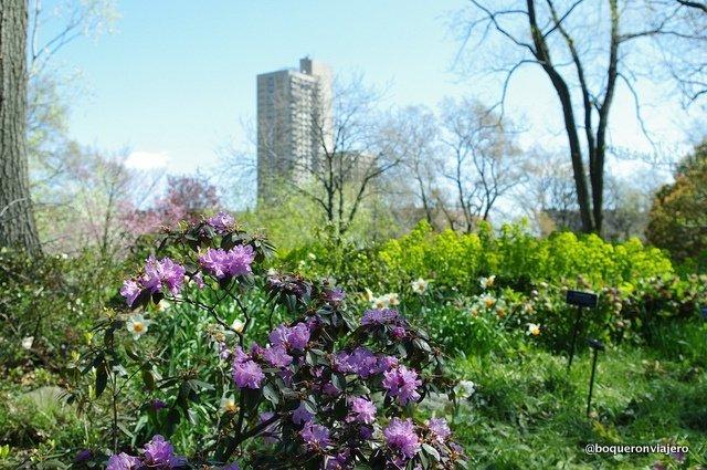 Vistas desde el Jardín Botánico de Brooklyn