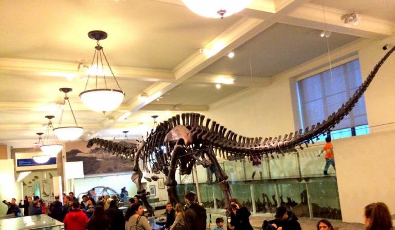 Dinosaurio en el Museo Americano de Historia Natural de Nueva York