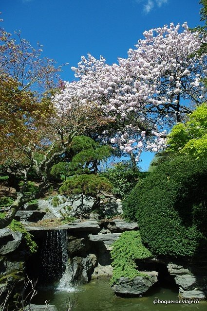 Jardín Japonés del Brooklyn Botanic Garden