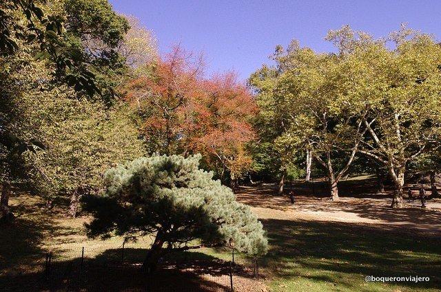 Árboles con hojas de distintos colores en Central Park