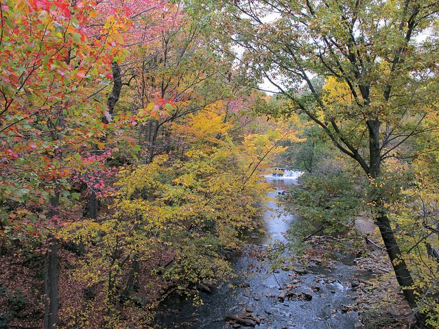 Bronx River, New York Botanical Garden