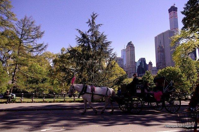 Coche de caballos en Central Park