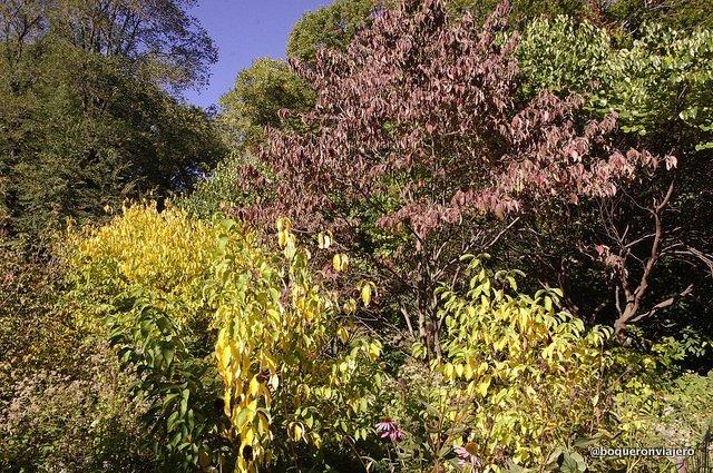 Las hojas de Central Park en otoño