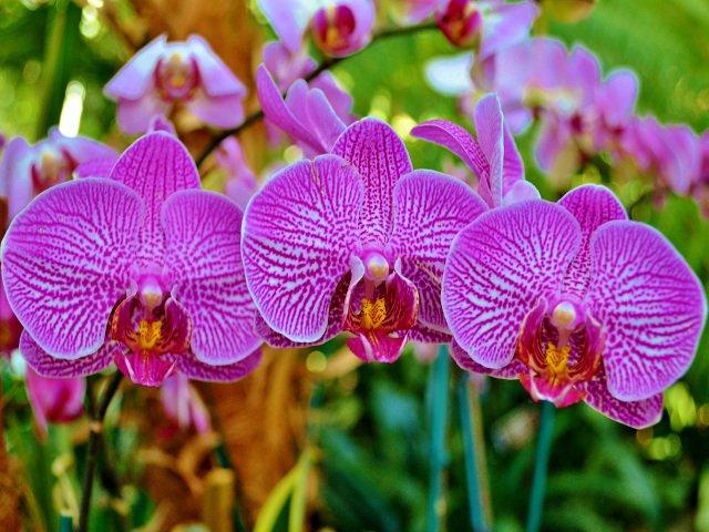 Esta semana en Nueva York se puede ver las orquídeas en los jardínes botánicos