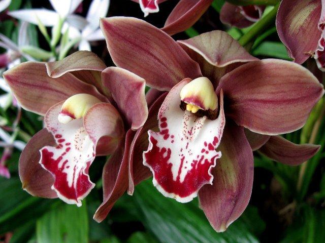 Las orquídeas de los jardines botánicos son preciosas y es una de las cosas que puedes ver en Nueva York en marzo
