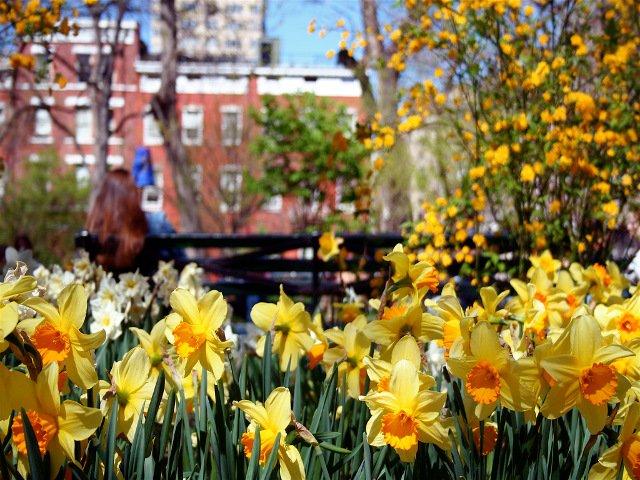 Esta semana en Nueva York hay flores!
