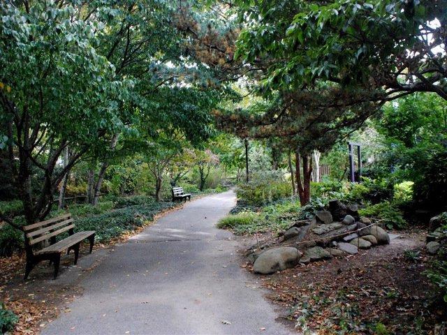 Esta-semana-en-Nueva-York-celebrar-el-dia-de-los-arboles