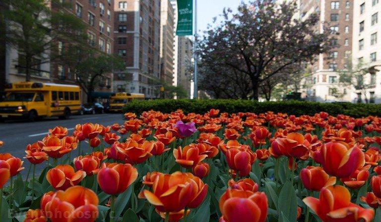 Qué hacer en Nueva York en mayo