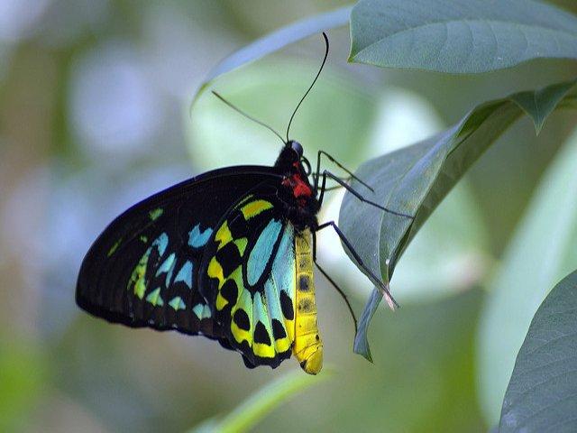 Esta-semana-en-Nueva-York-puedes-ver-las-mariposas