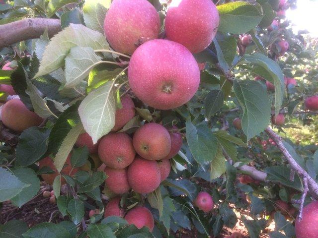 Esta semana en Nueva York toma un gran bocado de una manzana