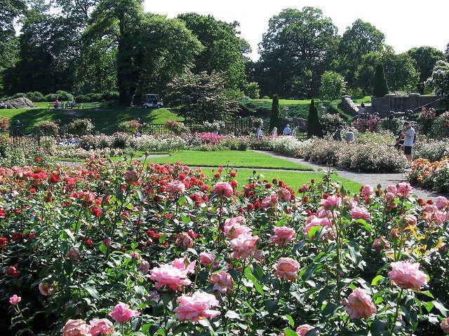 Jardín de Rosas en el Bronx