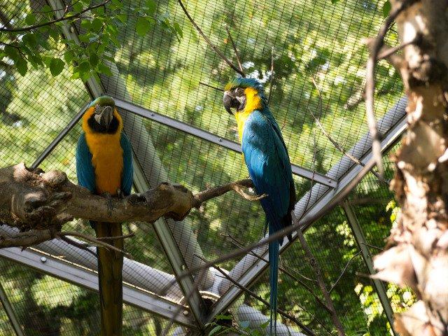 Pajaros en el Zoo de Queens en Flushing
